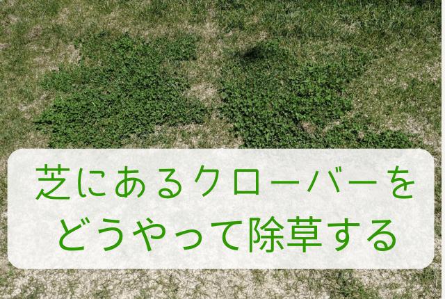 芝にあるクローバーを どうやって除草する