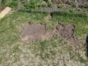 芝を取ったあと